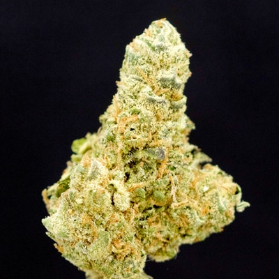 Forever a Classic, Jack Herer