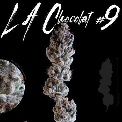 I Like LAChocolat